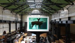 TRAMSHED – Chicken or Beef?